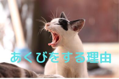 「あくびは退屈のしるしではなく「目をさます」ための動作」のアイキャッチ画像